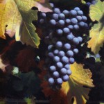Late Summer Grape -Oil -12x9